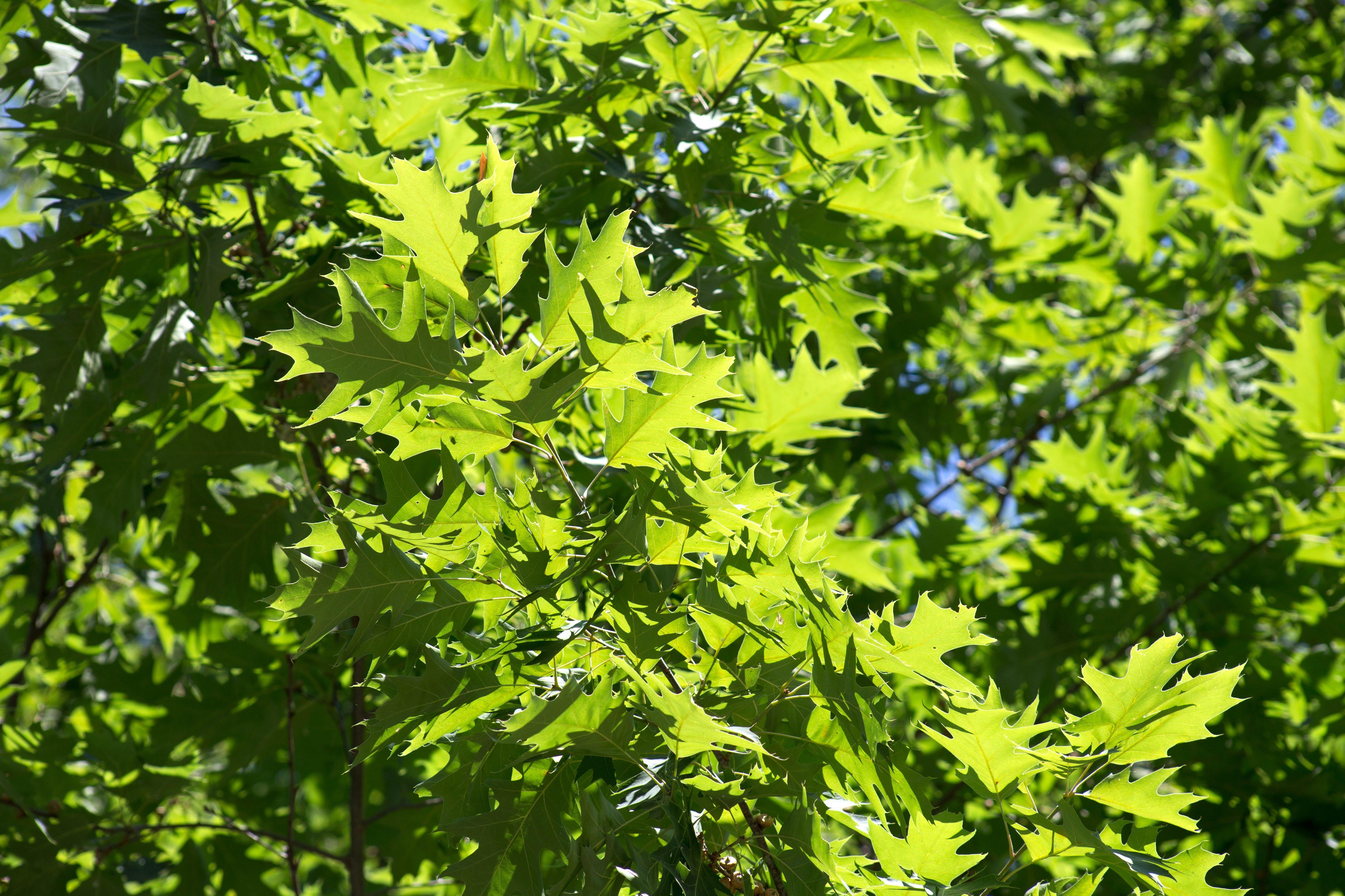 Imagen gratis hojas verdes textura naturaleza hojas for Arboles de hoja perenne en galicia