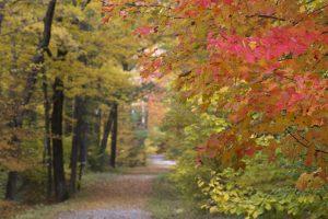 estrada florestal, queda, folhas, outono, folhas, árvores