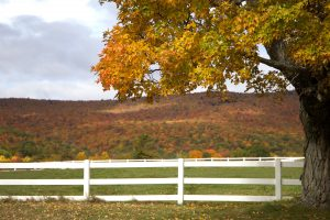 village, white fence, fall, foliage, autumn, leaves, trees