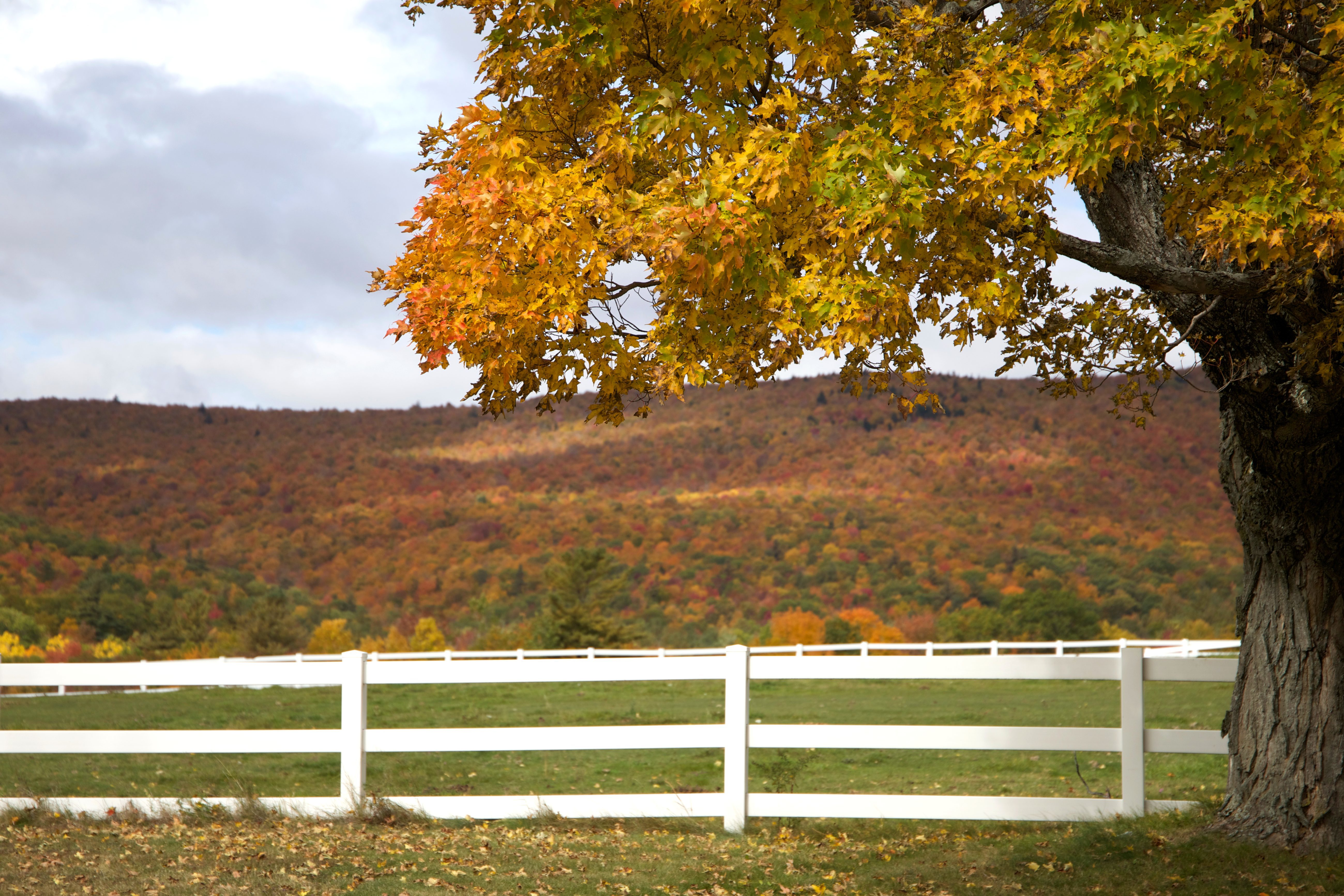 Free Picture Village White Fence Fall Foliage Autumn