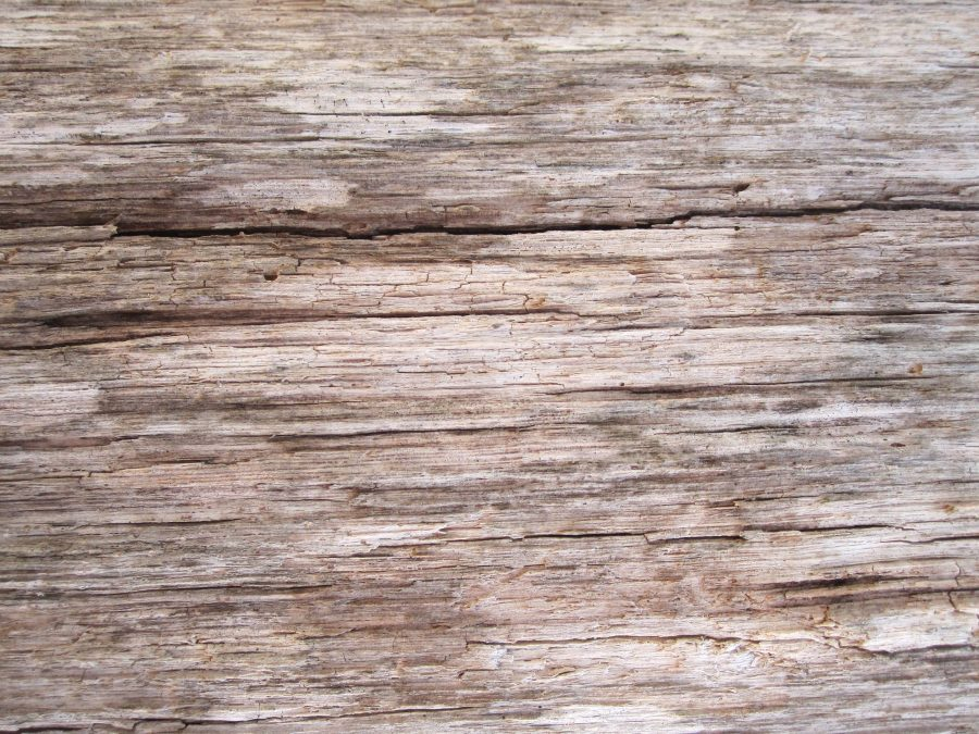 Free Picture Light Brown Wood Old Pattern Wood Texture
