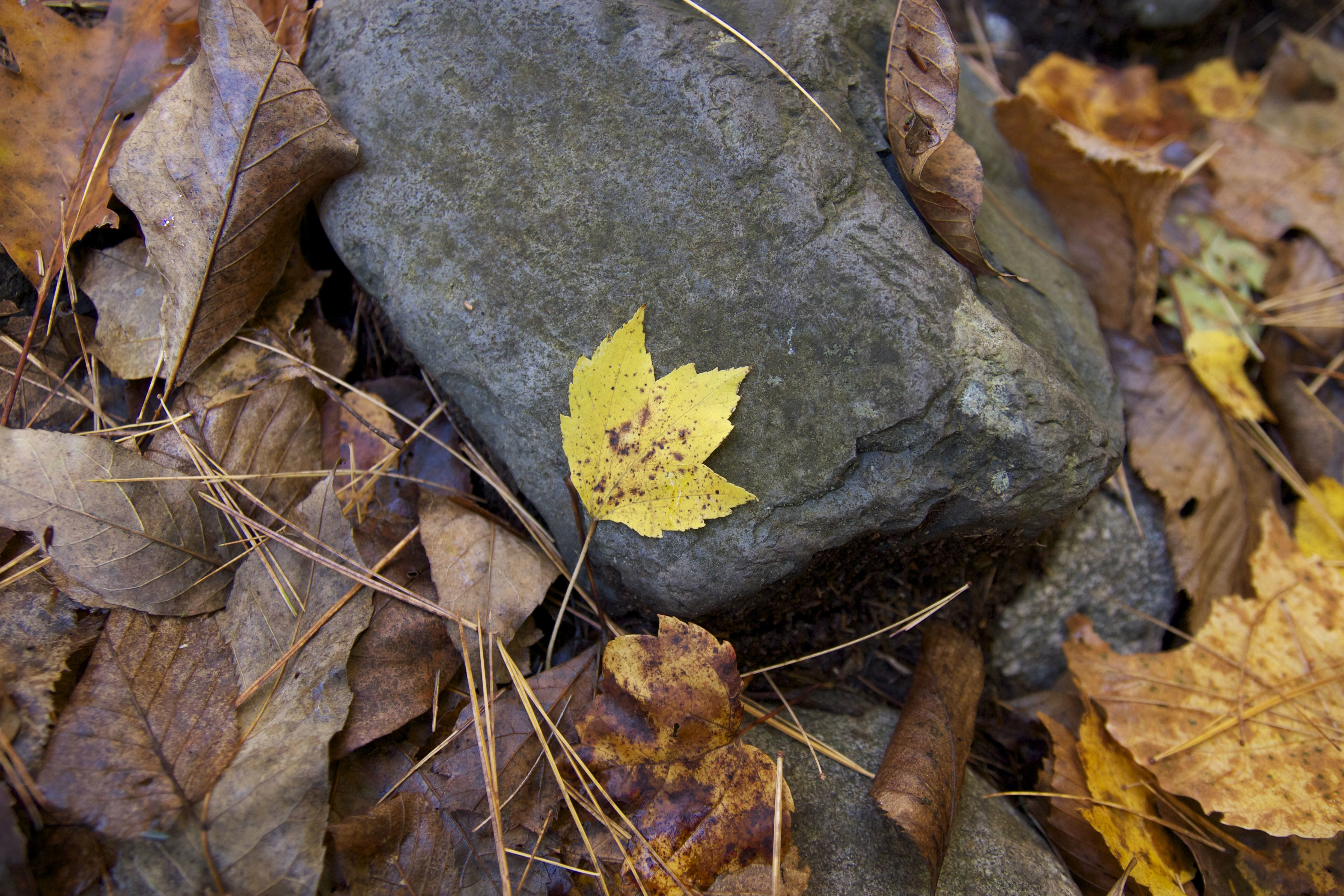 gray rock, leaves, october, autumn season, foliage, leaves, rocks