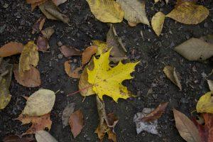 地面, 秋天, 叶子, 秋天, 叶子