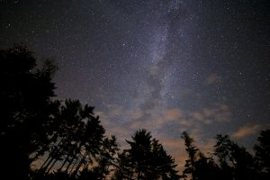 forest, night sky, stars, night, milky way, trees