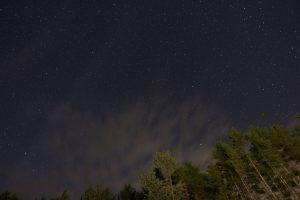 éjfél, csillagok, erdő, csillagok, fák, felhők, éjszaka
