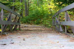 wooden bridge, road, macro, bridge, hiking, trees