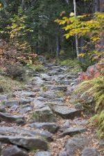 rotsachtige trail bospad, rotsen, bomen, parcours, wandelen