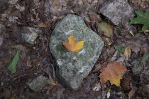 big rock, texture, rocks, leaves, fall, foliage, autumn