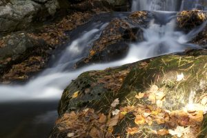 river, creek water, waterfall, water, leaves
