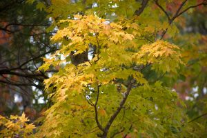 Autums Wald, Laub, Herbst, Blätter
