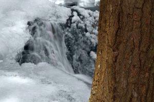 Kreek, bevroren water, ijzige, vorst, boomschors, winter, bomen, bevroren ijs
