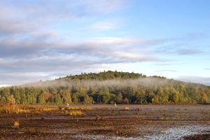 marshland, natural habitat, forest, fog, trees, clouds