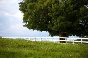 campo, pueblo, césped, hierba verde, árbol grande