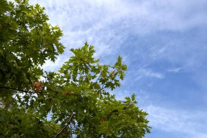 jasné obloha, modrá obloha, stromy, mraky, listy