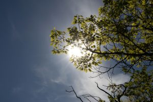 under tree, nature, trees, leaves, sun, sky, clouds