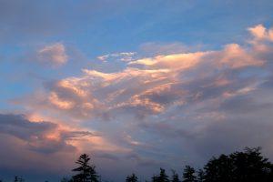 Dawn, mraky, obloha, stromy