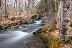 creek, spring time, trees, leaves, water