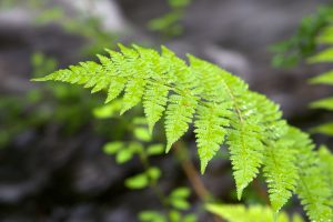 fern leaves, flora, green leaves, close up, water