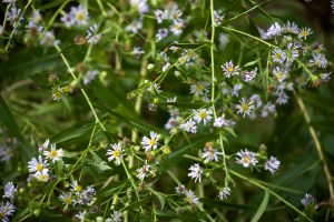 wild flowers, tiny white petals, greenish,, flowers