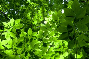 leaves texture, green, greenish leaves, forest, trees, leaves