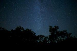 éjszaka, erdő, fák, nyári este
