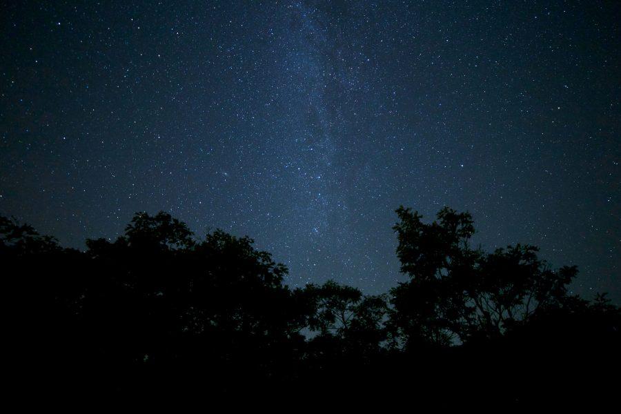 ніч, ліс, дерев, літню ніч