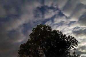 Soumrak čas, noc, hvězdy, mraky, stromy
