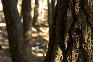 l'écorce des arbres, le cortex texture, forêt, bois, arbres, été
