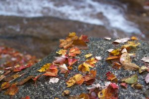 autumn, creek water, water, river, rocks, leaves, foliage