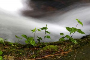 Creek water, stroom, waterbron, lentetijd, kleine groene planten, flora