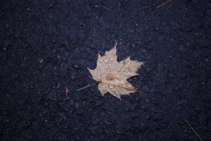 hoja, gotas de agua, lluvia, follaje, hojas de otoño