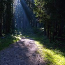 Forest road, schaduw, zonlicht, zonnestralen, parcours, bomen, bossen
