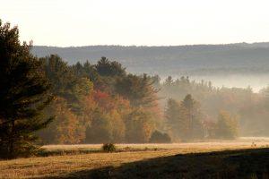 summer field, hills, morning, mist, sunrise, trees, fog
