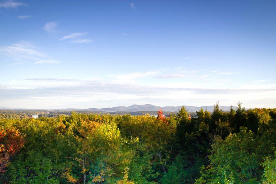 kleurrijke bladeren, bomen, met uitzicht op, bomen, gebladerte, bergen