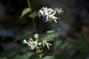 tiny flowers, white, plants, leaves