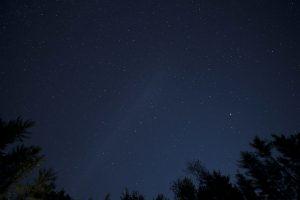 shooting stars, night sky, stars, trees, night