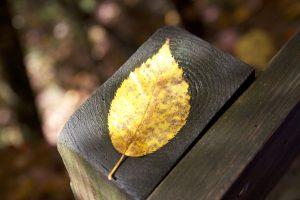 valla de madera, de cerca, hoja, follaje, caída
