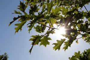 soleil, été, nature, arbres, feuilles, soleil, ciel