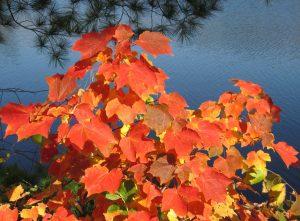 feuillage rouge, feuilles rouges, réflexion de l'eau, automne, feuilles, feuillage, automne