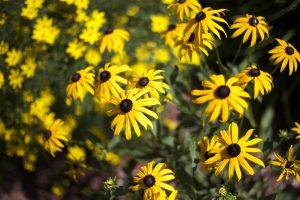 цветущий луг, желтоватые цветки, темные нектар, лето
