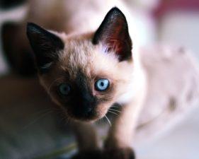 photography, cat, kitten, pet, animal