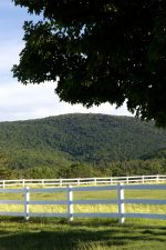 spring time, green grass, white fence, wooden fence, trees, mountains, fence