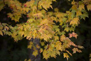 autumn leaves, foliage, autumn, leaves