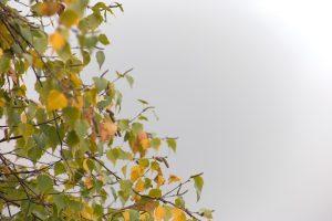 เมฆขาว ฤดูใบไม้ร่วง ธรรมชาติ หมอก ต้นไม้ ฤดูใบไม้ร่วง ใบไม้ ใบไม้