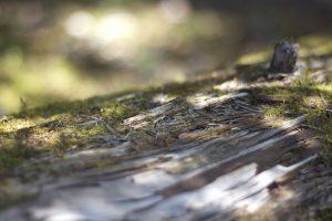 森、マクロ木、夏のシーズン