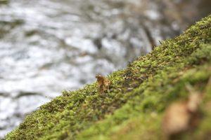 blurry grass, macro grass, water