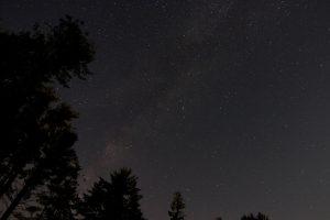 bosque cielo, estrellas de la noche, estrellas, noche, árboles, cielo, vía láctea