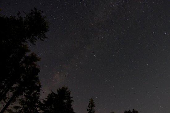 forest sky, night stars, stars, night, trees, sky, milky way