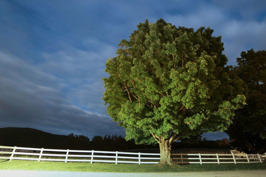 veliko drvo, poljoprivredno zemljište, ceste, noć, zvijezde, oblaci, drveće, ograde