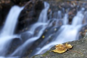 rock, yellow leaf, leaves, water, stream, foliage, autumn, rocks